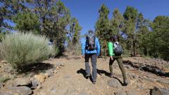 Hiking hikers walking on hike - rear view tracking in forest Stock Footage