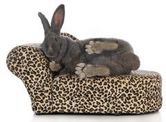 Fancy bunny Stock Photos