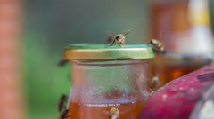 Bees on the honey jar Stock Footage