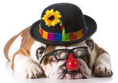 Silly dog Stock Photos