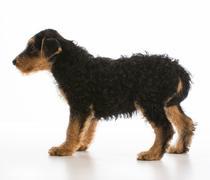 Worried puppy Stock Photos