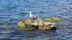 Seagull on a rock in the sea Stock Footage