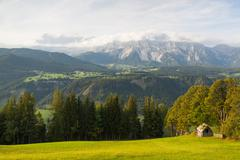 on pasture in mountains - stock photo