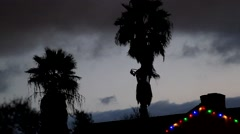 Christmas lights in tropical palm tree neighborhood with gray clouds - stock footage
