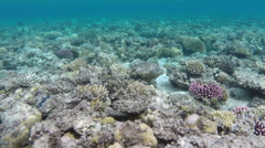 Coral and fish in the Red Sea - Egypt Stock Footage