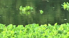 The movement of river water and water plants Stock Footage