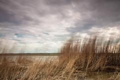 reeds on the baltic sea - stock photo