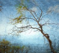 Bare branches on grunge sky background Stock Illustration