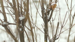 bush without leaves on white snow - stock footage