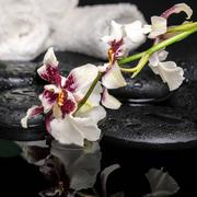 Healthcare concept of orchid cambria flower with drops and white towels on ze Stock Photos