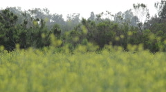 HD Blurry field in foreground tree line Stock Footage