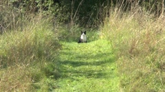 Cat sitting amongst grass in the Cirencester ampitheatre, Cirencester UK. Stock Footage
