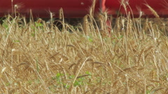 Wheat harvesting Stock Footage