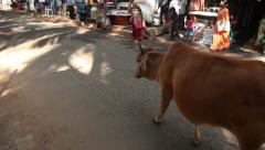 INDIA, GOA - 2012: Cow walking on the market Stock Footage