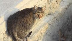 Cat prepared for a jump and leaped out Stock Footage