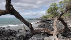 Snag on Rocky Ocean Shoreline in Hawaii Stock Footage