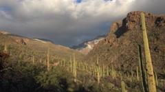 4K Arizona Saguaro Cactus Snow Dusted Landscape Time Lapse Stock Footage