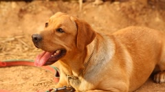 Dog at rural area Stock Footage