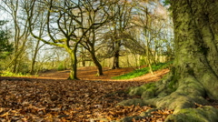 Autumn Leaves timelapse in the woodlands of Hampstead Heath Stock Footage