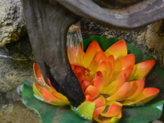 Stock Video Footage of Artificial fountain. Related clips are in my portfolio in 1920x1080.