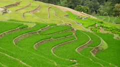 Zoom Out of Scenic Rice Terraces in Northern Vietnam -  Sapa Vietnam Stock Footage