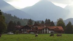 Cows Graze Grass German Alps Füssen, Germany 4K Stock Video Footage Stock Footage