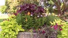 Polson Park, pan from flowers to pond Stock Footage