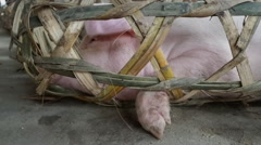 China - Pigs in Farmers Market Stock Footage