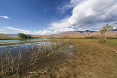 bank of the river in altai mountains - stock photo