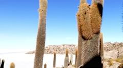 Incahuasi cactus hill uyuni desert Stock Footage