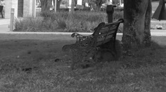 Empty bench sitting under tree in college town Stock Footage