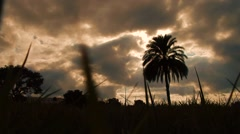 View from low grass angle into dark sky, sun creeping through behind palm tree Stock Footage
