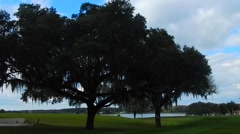 Gorgeous view of tree in open field at St Leo's University in Florida Stock Footage