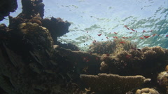 Colorful underwater reef with coral and sponges - stock footage