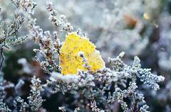 Frozen heather flower Stock Photos