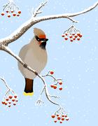 Stock Illustration of waxwing and rowanberries