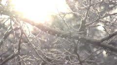 Snowflakes in the Sunlight Stock Footage