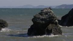Bird on Rock at Meoto Iwa in Japan Stock Footage