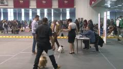 Female and male owners leading Pomeranian Spitz at the dog show,tracking shot Stock Footage