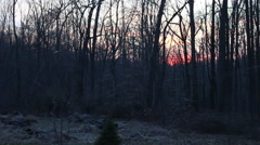 Trees on a farm during sunset - Terrence Malick style - stock footage
