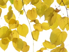 Autumn park. Related clips are in my portfolio in 1920x1080. - stock footage