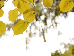 Autumn landscape. Related clips are in my portfolio in 1920x1080. - stock footage