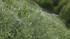 cobweb spider - stock footage