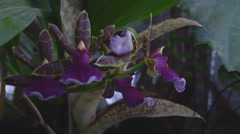 Medium Close Up Shot of flora at Nikitsky Botanical Garden in Crimea, Ukraine. Stock Footage