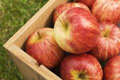 Box Of Fresh Gala Apples Stock Photos