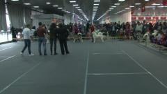 Dog show, court,judges evaluate Alaskan Malamutes in front of audience Stock Footage