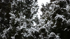 Snow in the winter Stock Footage