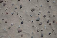 Pebbles, sand and bird footprints, for background Stock Photos