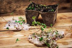 Stems sprout plant in marl Stock Photos