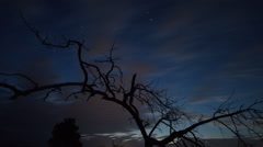 Dead Tree And Night Sky Stock Footage